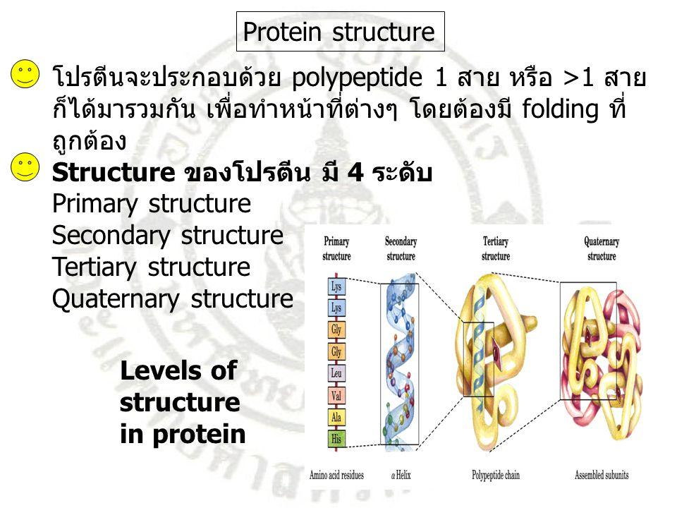 โปรตีนจะประกอบด้วย polypeptide 1 สาย หรือ >1 สาย ก็ได้มารวมกัน เพื่อทำหน้าที่ต่างๆ โดยต้องมี folding ที่ ถูกต้อง Structure ของโปรตีน มี 4 ระดับ Primar