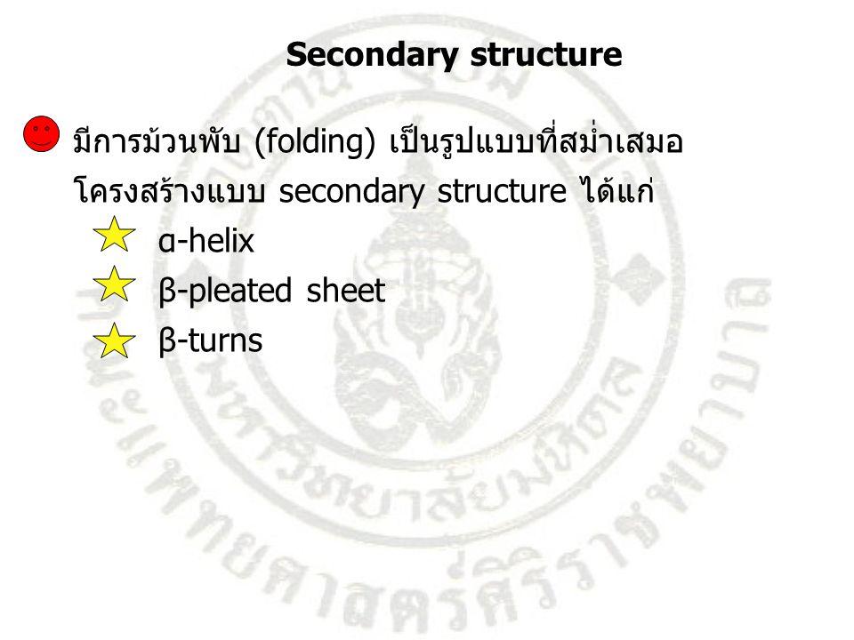 มีการม้วนพับ (folding) เป็นรูปแบบที่สม่ำเสมอ โครงสร้างแบบ secondary structure ได้แก่ α-helix β-pleated sheet β-turns Secondary structure