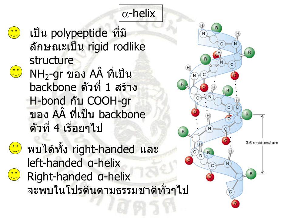เป็น polypeptide ที่มี ลักษณะเป็น rigid rodlike structure NH 2 -gr ของ AÂ ที่เป็น backbone ตัวที่ 1 สร้าง H-bond กับ COOH-gr ของ AÂ ที่เป็น backbone ต
