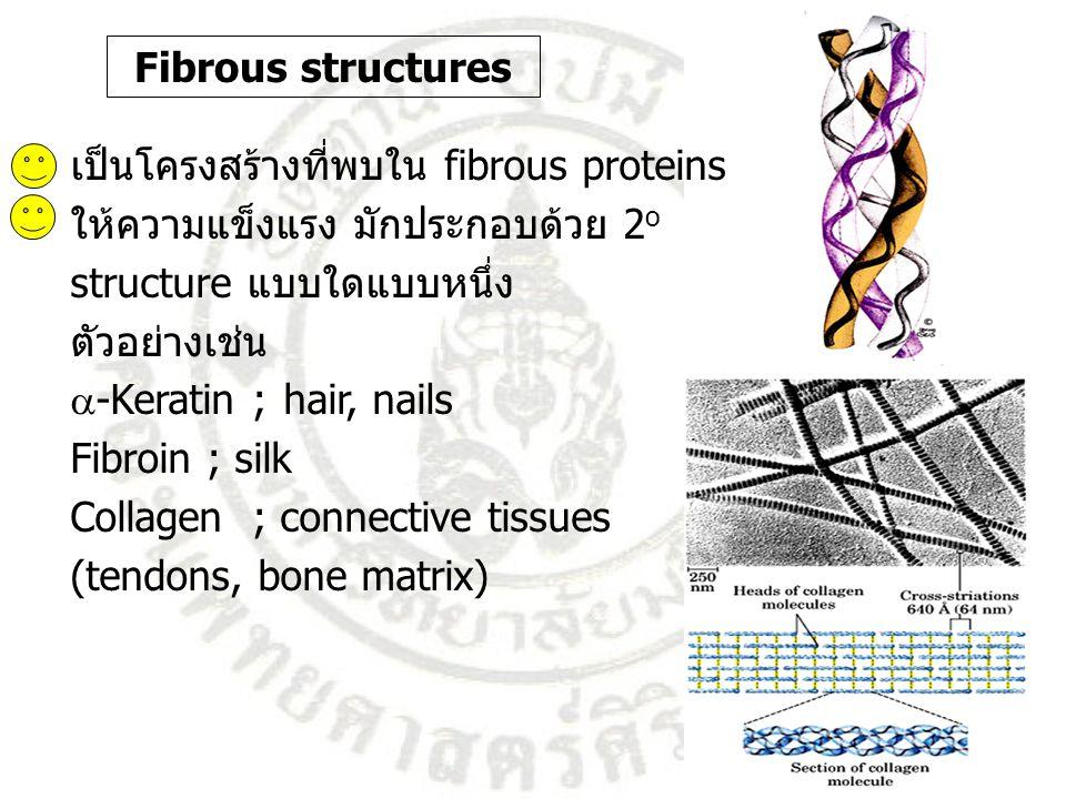 Fibrous structures เป็นโครงสร้างที่พบใน fibrous proteins ให้ความแข็งแรง มักประกอบด้วย 2 o structure แบบใดแบบหนึ่ง ตัวอย่างเช่น  -Keratin ;hair, nails
