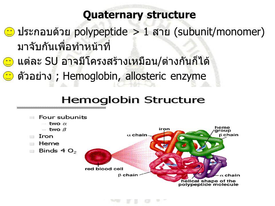 Quaternary structure ประกอบด้วย polypeptide > 1 สาย (subunit/monomer) มาจับกันเพื่อทำหน้าที่ แต่ละ SU อาจมีโครงสร้างเหมือน/ต่างกันก็ได้ ตัวอย่าง ; Hem