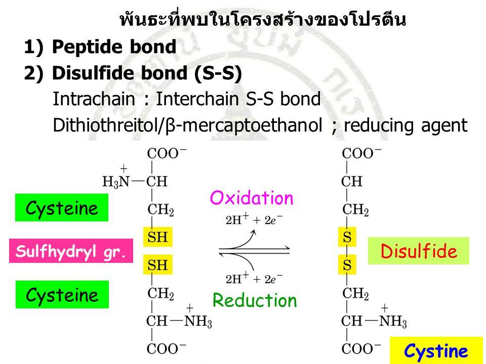 พันธะที่พบในโครงสร้างของโปรตีน 1)Peptide bond 2)Disulfide bond (S-S) Intrachain : Interchain S-S bond Dithiothreitol/β-mercaptoethanol ; reducing agen