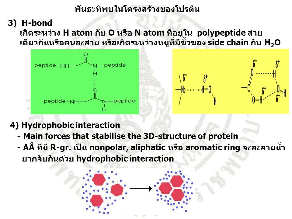 พันธะที่พบในโครงสร้างของโปรตีน 3) H-bond เกิดระหว่าง H atom กับ O หรือ N atom ที่อยู่ใน polypeptide สาย เดียวกันหรือคนละสาย หรือเกิดระหว่างหมู่ที่มีขั