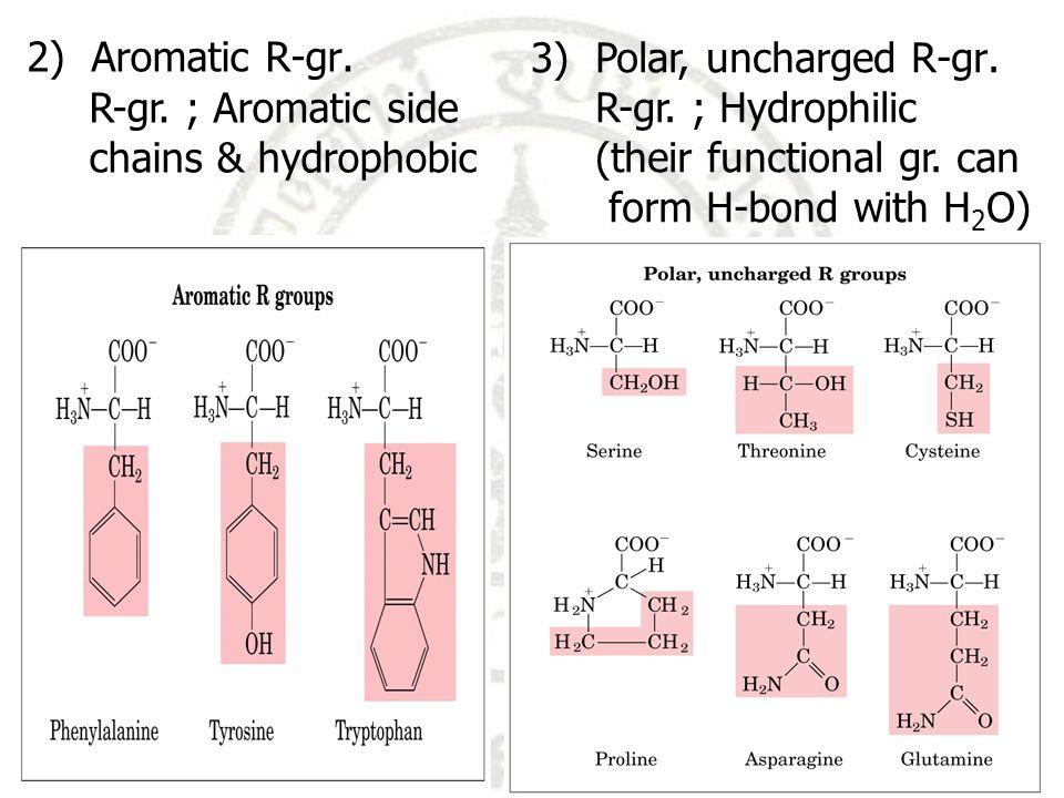 R-gr.เป็น acid (H + donor) มีประจุ – ที่ phys. pH e.