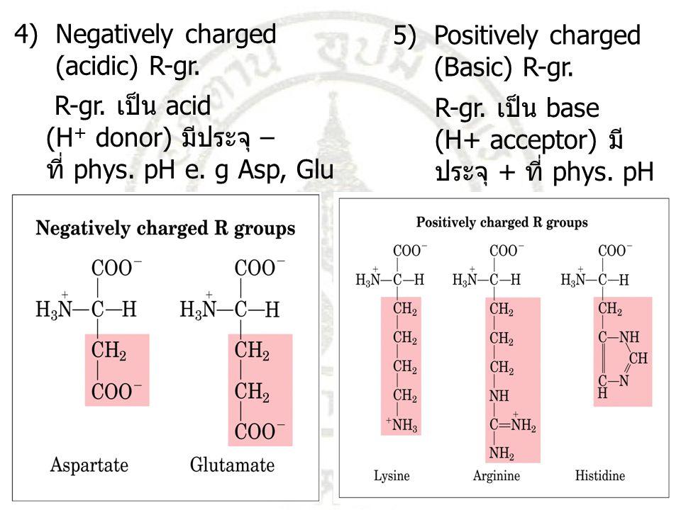 R-gr. เป็น acid (H + donor) มีประจุ – ที่ phys. pH e. g Asp, Glu 4) Negatively charged (acidic) R-gr. 5) Positively charged (Basic) R-gr. R-gr. เป็น b