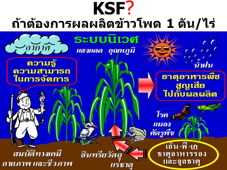 KSF ? ถ้าต้องการผลผลิตข้าวโพด 1 ตัน/ไร่