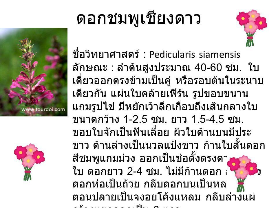 ดอกชมพูเชียงดาว ชื่อวิทยาศาสตร์ : Pedicularis siamensis ลักษณะ : ลำต้นสูงประมาณ 40-60 ซม.
