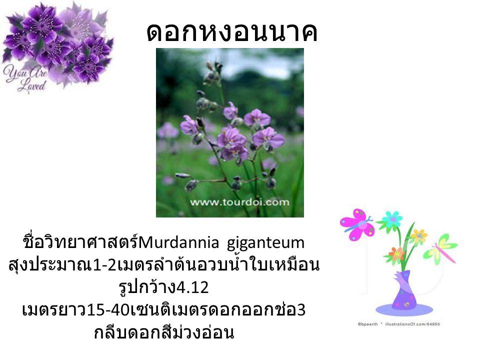 ดอกหงอนนาค ชื่อวิทยาศาสตร์ Murdannia giganteum สุงประมาณ 1-2 เมตรลำต้นอวบน้ำใบเหมือน รูปกว้าง 4.12 เมตรยาว 15-40 เซนติเมตรดอกออกช่อ 3 กลีบดอกสีม่วงอ่อน