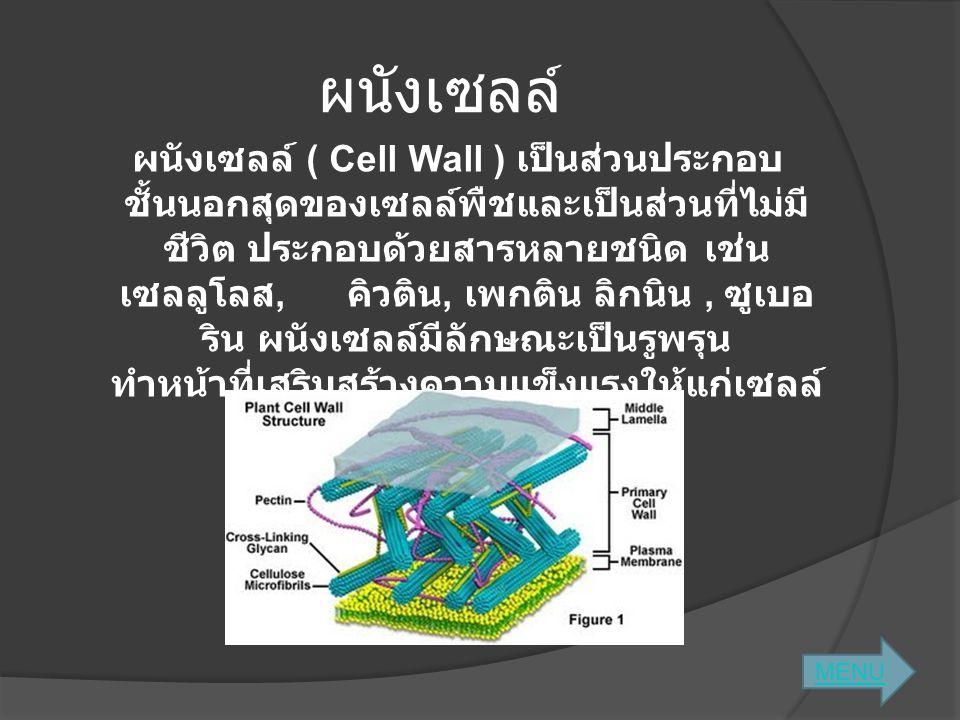 ผนังเซลล์ ผนังเซลล์ ( Cell Wall ) เป็นส่วนประกอบ ชั้นนอกสุดของเซลล์พืชและเป็นส่วนที่ไม่มี ชีวิต ประกอบด้วยสารหลายชนิด เช่น เซลลูโลส, คิวติน, เพกติน ลิ