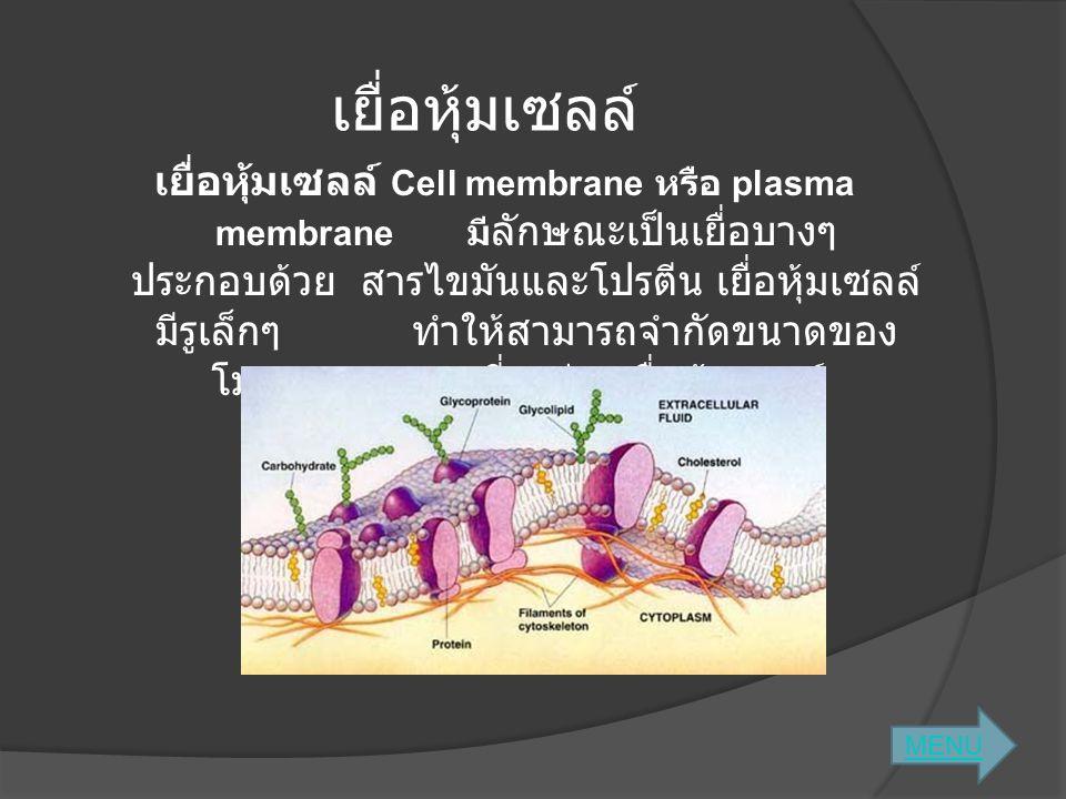 เยื่อหุ้มเซลล์ เยื่อหุ้มเซลล์ Cell membrane หรือ plasma membrane มี ลักษณะเป็นเยื่อบางๆ ประกอบด้วย สารไขมันและโปรตีน เยื่อหุ้มเซลล์ มีรูเล็กๆ ทำให้สาม