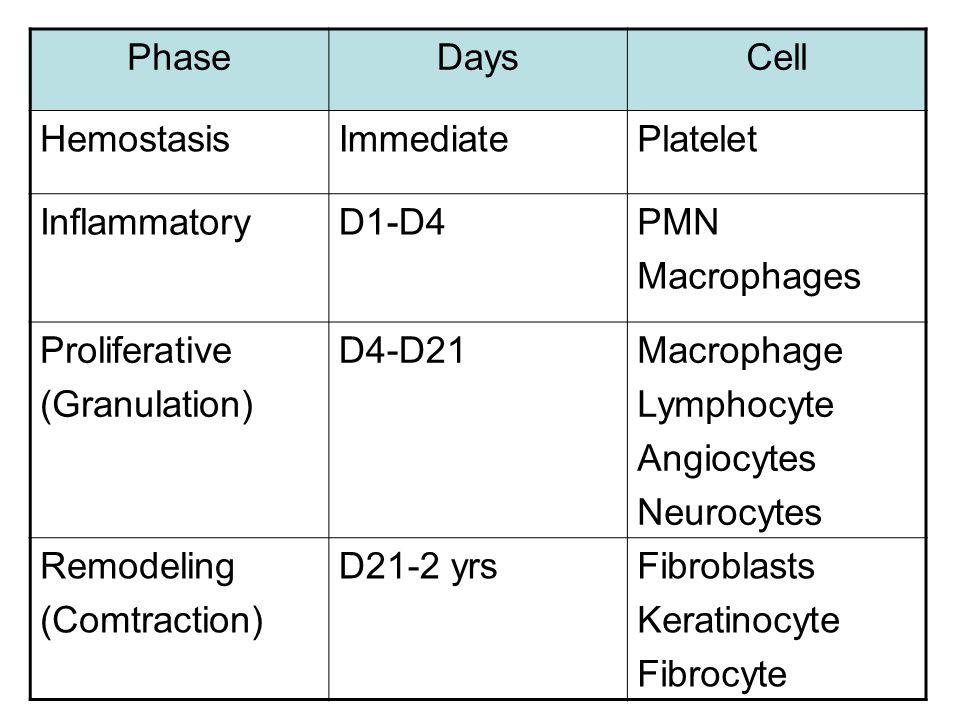 PhaseDaysCell HemostasisImmediatePlatelet InflammatoryD1-D4PMN Macrophages Proliferative (Granulation) D4-D21Macrophage Lymphocyte Angiocytes Neurocyt