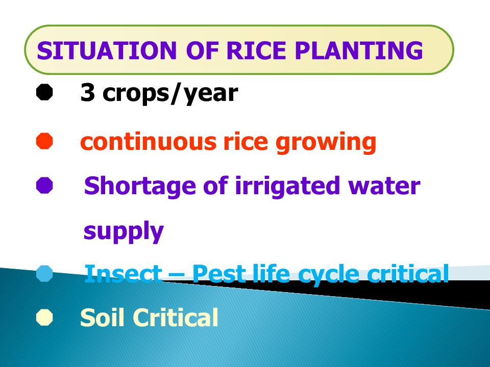  3 crops/year  continuous rice growing  Shortage of irrigated water supply  Insect – Pest life cycle critical  Soil Critical SITUATION OF RICE PLANTING