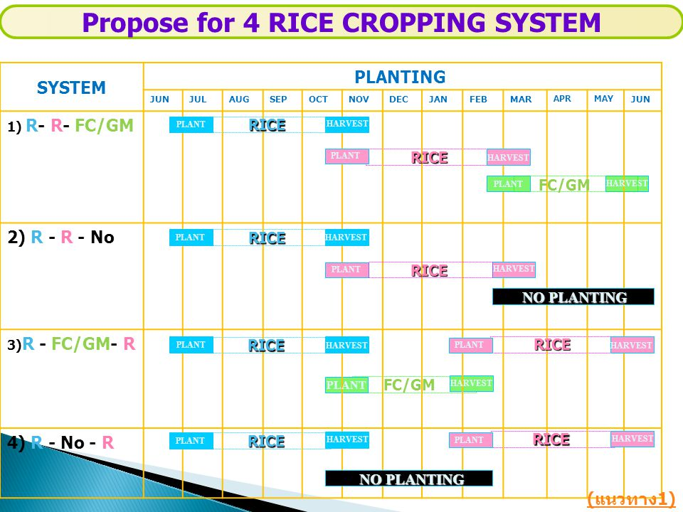 SYSTEM PLANTING JUNJULAUGSEPOCTNOVDECJANFEBMAR APRMAY JUN 1) R- R- FC/GM 2) R - R - No 3) R - FC/GM- R 4) R - No - R RICE PLANT HARVEST RICE FC/GM HARVEST Propose for 4 RICE CROPPING SYSTEM RICE RICE RICE NO PLANTING ( แนวทาง 1) PLANT NO PLANTING PLANT HARVEST RICE RICE RICE FC/GM