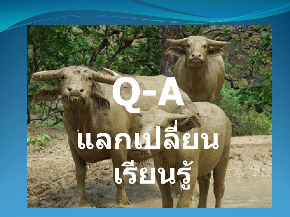 Q-A แลกเปลี่ยน เรียนรู้