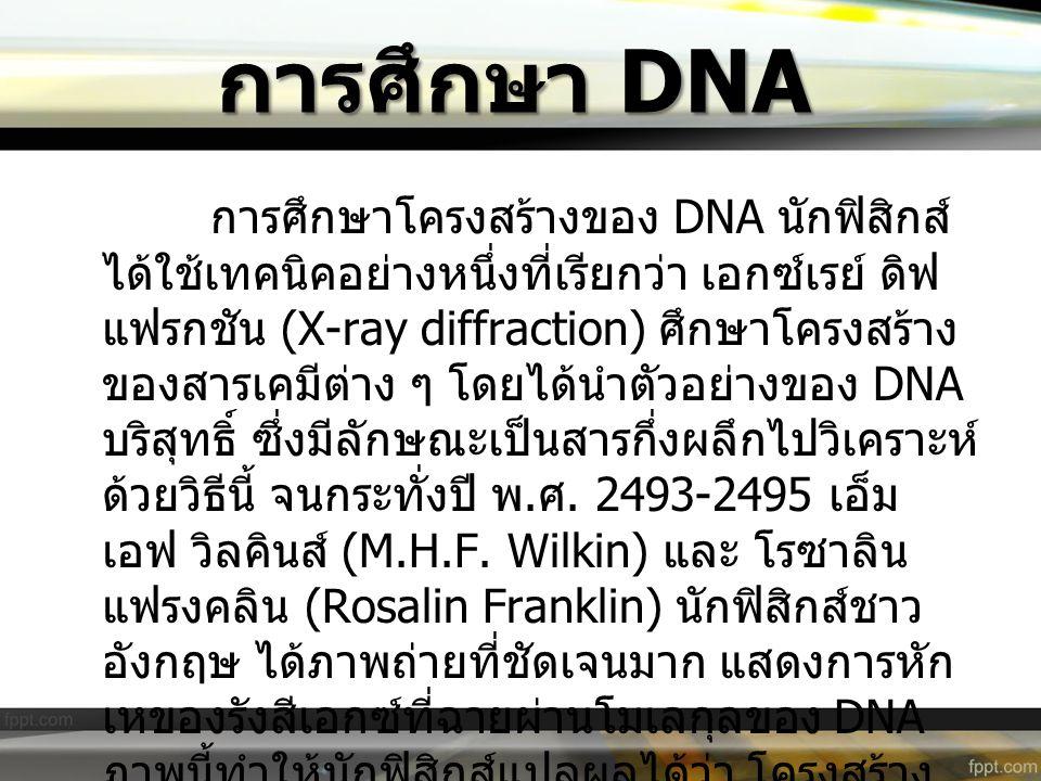 การศึกษา DNA การศึกษาโครงสร้างของ DNA นักฟิสิกส์ ได้ใช้เทคนิคอย่างหนึ่งที่เรียกว่า เอกซ์เรย์ ดิฟ แฟรกชัน (X-ray diffraction) ศึกษาโครงสร้าง ของสารเคมี