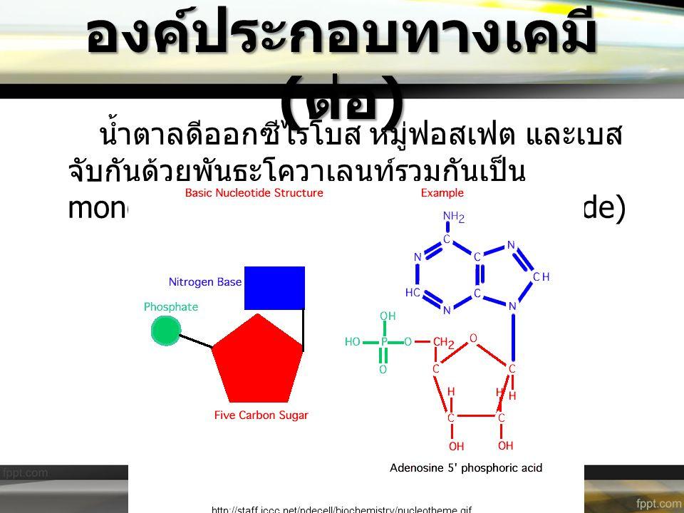 องค์ประกอบทางเคมี ( ต่อ ) น้ำตาลดีออกซีไรโบส หมู่ฟอสเฟต และเบส จับกันด้วยพันธะโควาเลนท์รวมกันเป็น monomer ที่เรียกว่า นิวคลีไทด์ (Nucleotide) http://s