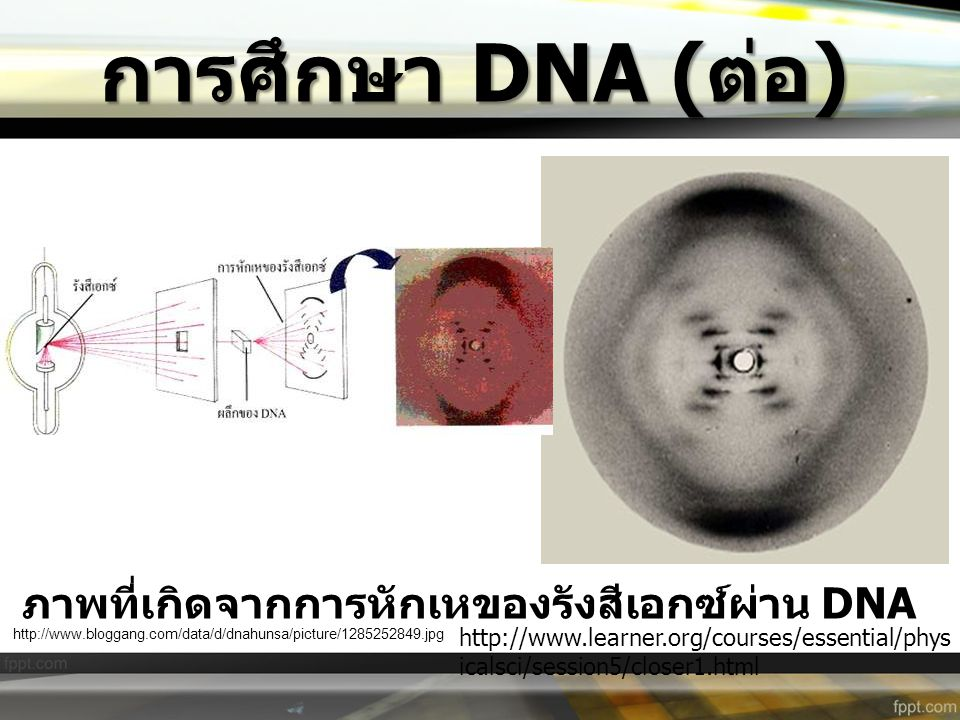 http://www.mun.ca/biology/scarr/Polynucleotide_directionality.gif