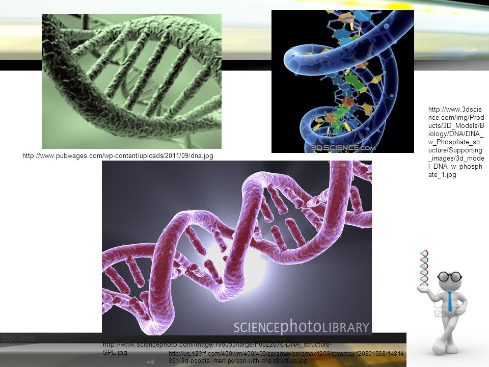 http://us.123rf.com/400wm/400/400/coramax/coramax1208/coramax120801568/14814 851-3d-people--man-person-with-dna-structure.jpg http://www.pubwages.com/wp-content/uploads/2011/09/dna.jpg http://www.sciencephoto.com/image/198053/large/F0022076-DNA_structure- SPL.jpg http://www.3dscie nce.com/img/Prod ucts/3D_Models/B iology/DNA/DNA_ w_Phosphate_str ucture/Supporting _images/3d_mode l_DNA_w_phosph ate_1.jpg