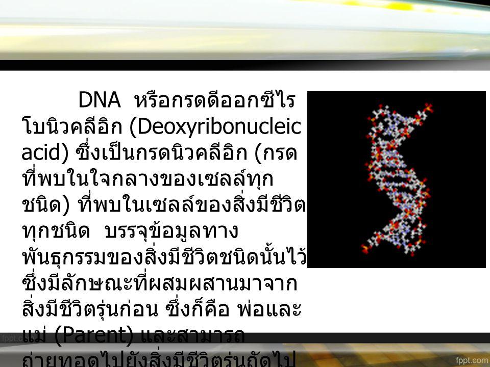 DNA หรือกรดดีออกซีไร โบนิวคลีอิก (Deoxyribonucleic acid) ซึ่งเป็นกรดนิวคลีอิก ( กรด ที่พบในใจกลางของเซลล์ทุก ชนิด ) ที่พบในเซลล์ของสิ่งมีชีวิต ทุกชนิด