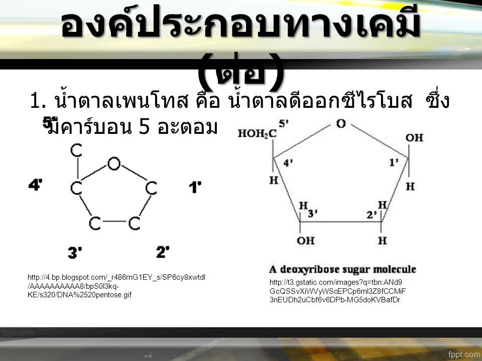 องค์ประกอบทางเคมี ( ต่อ ) 1. น้ำตาลเพนโทส คือ น้ำตาลดีออกซีไรโบส ซึ่ง มีคาร์บอน 5 อะตอม http://4.bp.blogspot.com/_r486mG1EY_s/SP6cy8xwtdI /AAAAAAAAAA8
