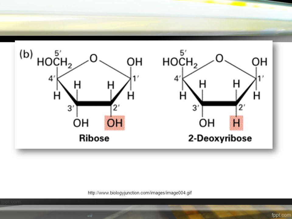 องค์ประกอบทางเคมี ( ต่อ ) 2.