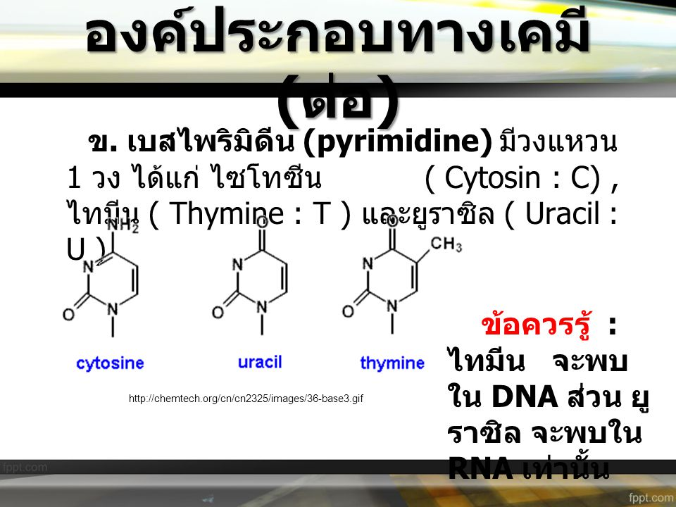 องค์ประกอบทางเคมี ( ต่อ ) ข. เบสไพริมิดีน (pyrimidine) มีวงแหวน 1 วง ได้แก่ ไซโทซีน ( Cytosin : C), ไทมีน ( Thymine : T ) และยูราซิล ( Uracil : U ) ht