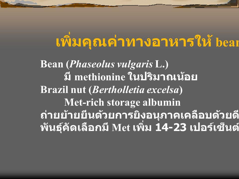 เพิ่มคุณค่าทางอาหารให้ bean Bean (Phaseolus vulgaris L.) มี methionine ในปริมาณน้อย Brazil nut (Bertholletia excelsa) Met-rich storage albumin ถ่ายย้า