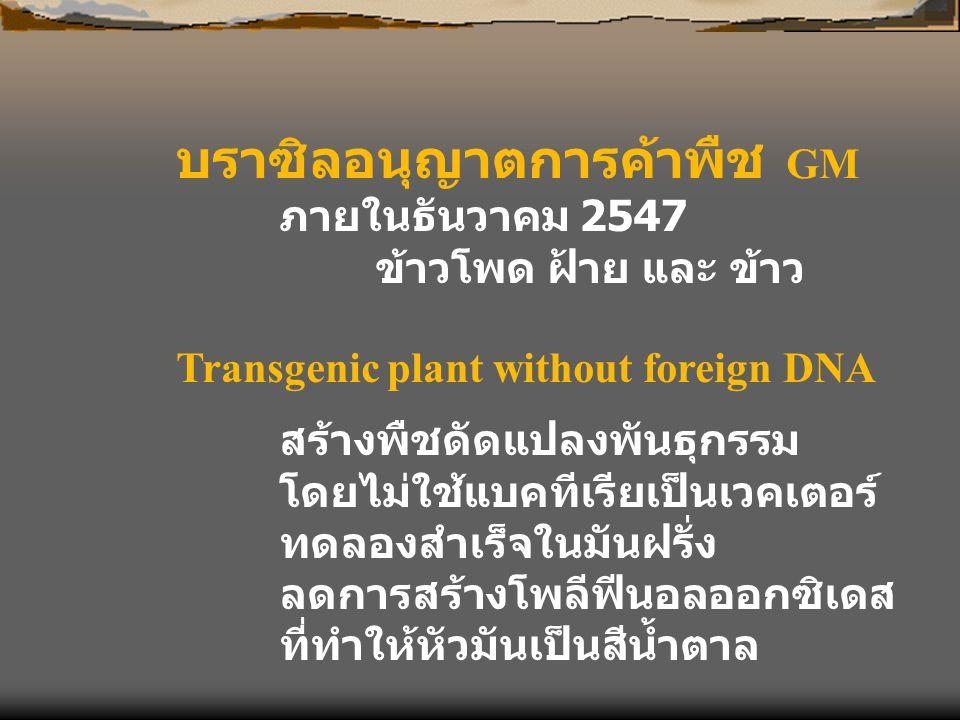 บราซิลอนุญาตการค้าพืช GM ภายในธันวาคม 2547 ข้าวโพด ฝ้าย และ ข้าว Transgenic plant without foreign DNA สร้างพืชดัดแปลงพันธุกรรม โดยไม่ใช้แบคทีเรียเป็นเ