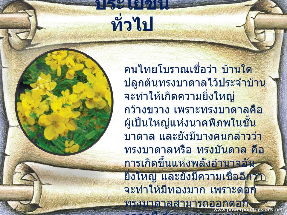 ประโยชน์ ทั่วไป คนไทยโบราณเชื่อว่า บ้านใด ปลูกต้นทรงบาดาลไว้ประจำบ้าน จะทำให้เกิดความยิ่งใหญ่ กว้างขวาง เพราะทรงบาดาลคือ ผู้เป็นใหญ่แห่งนาคพิภพในชั้น