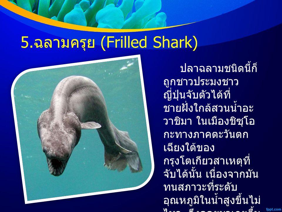 5. ฉลามครุย (Frilled Shark) ปลาฉลามชนิดนี้ก็ ถูกชาวประมงชาว ญี่ปุ่นจับตัวได้ที่ ชายฝั่งใกล้สวนน้ำอะ วาชิมา ในเมืองชิซุโอ กะทางภาคตะวันตก เฉียงใต้ของ ก