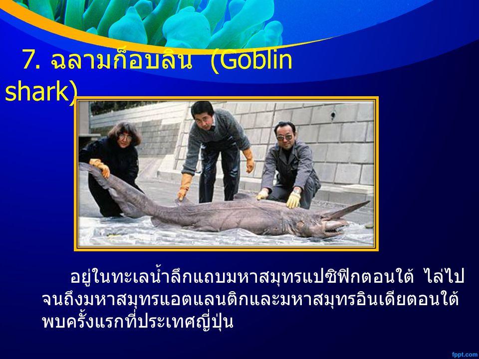7. ฉลามก็อบลิน (Goblin shark) อยู่ในทะเลน้ำลึกแถบมหาสมุทรแปซิฟิกตอนใต้ ไล่ไป จนถึงมหาสมุทรแอตแลนติกและมหาสมุทรอินเดียตอนใต้ พบครั้งแรกที่ประเทศญี่ปุ่น