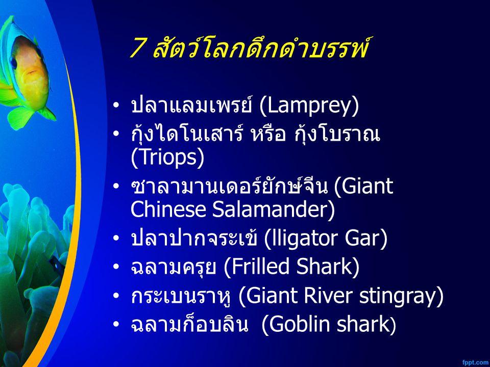 7 สัตว์โลกดึกดำบรรพ์ ปลาแลมเพรย์ (Lamprey) กุ้งไดโนเสาร์ หรือ กุ้งโบราณ (Triops) ซาลามานเดอร์ยักษ์จีน (Giant Chinese Salamander) ปลาปากจระเข้ (lligator Gar) ฉลามครุย (Frilled Shark) กระเบนราหู (Giant River stingray) ฉลามก็อบลิน (Goblin shark )