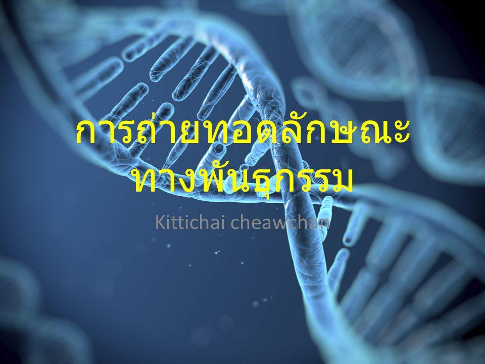 การถ่ายทอดลักษณะ ทางพันธุกรรม Kittichai cheawchan
