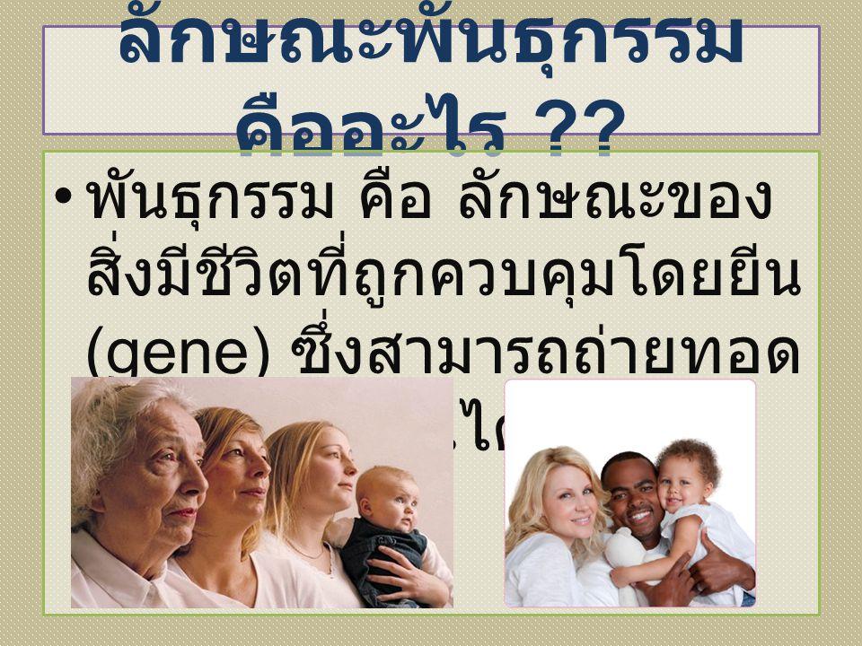 ลักษณะพันธุกรรม คืออะไร ?? พันธุกรรม คือ ลักษณะของ สิ่งมีชีวิตที่ถูกควบคุมโดยยีน (gene) ซึ่งสามารถถ่ายทอด ไปยังลูกหลานได้