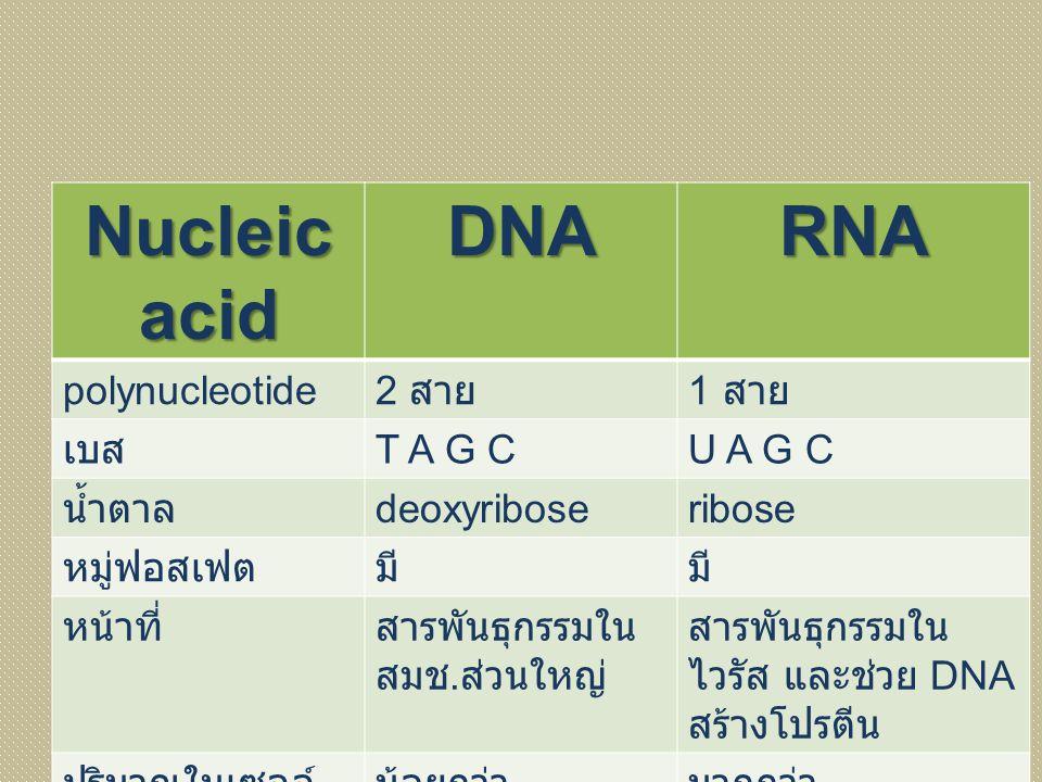 Nucleic acid DNARNA polynucleotide 2 สาย 1 สาย เบส T A G CU A G C น้ำตาล deoxyriboseribose หมู่ฟอสเฟตมี หน้าที่สารพันธุกรรมใน สมช. ส่วนใหญ่ สารพันธุกร