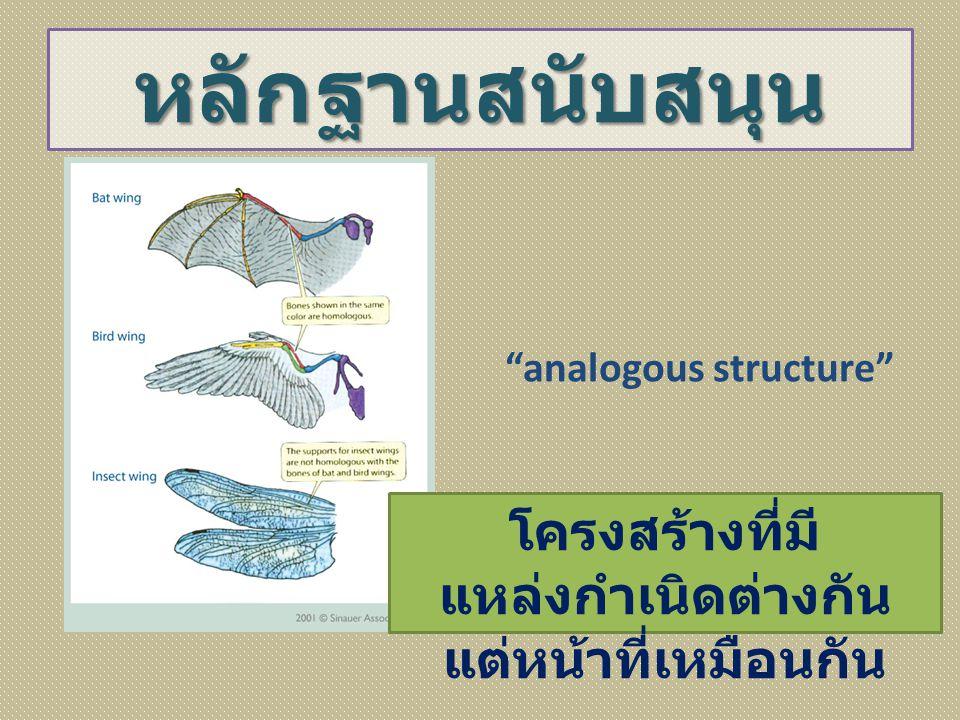 """หลักฐานสนับสนุน """"analogous structure"""" โครงสร้างที่มี แหล่งกำเนิดต่างกัน แต่หน้าที่เหมือนกัน"""