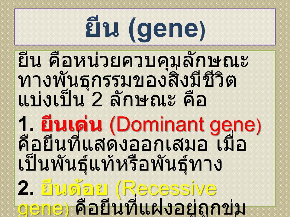 ยีน (gene ) ยีน คือหน่วยควบคุมลักษณะ ทางพันธุกรรมของสิ่งมีชีวิต แบ่งเป็น 2 ลักษณะ คือ ยีนเด่น (Dominant gene ) 1. ยีนเด่น (Dominant gene ) คือยีนที่แส