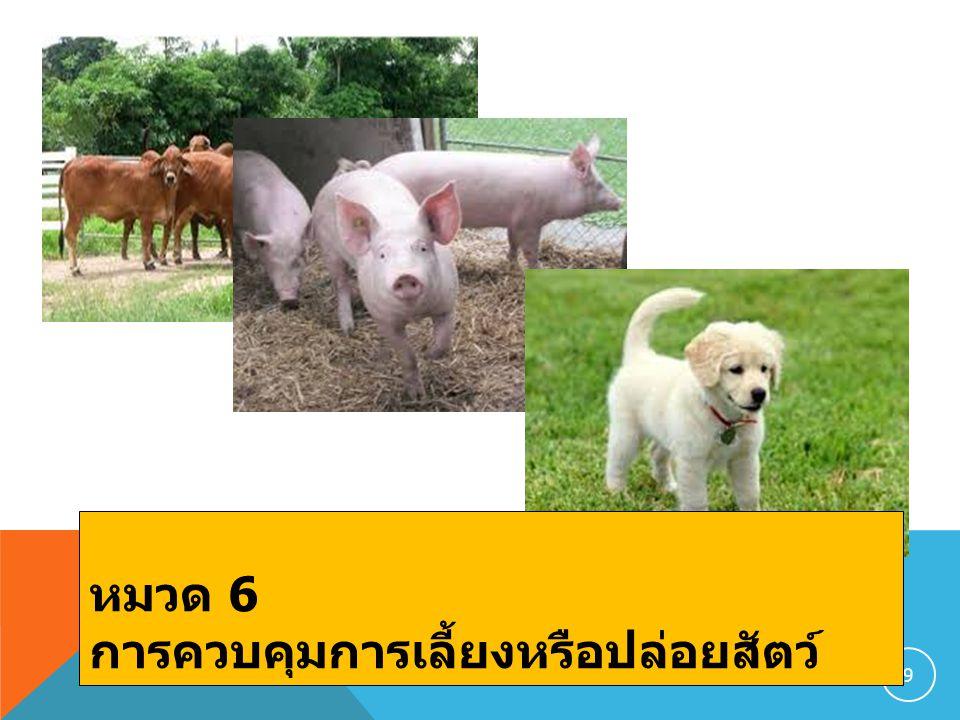 9 หมวด 6 การควบคุมการเลี้ยงหรือปล่อยสัตว์