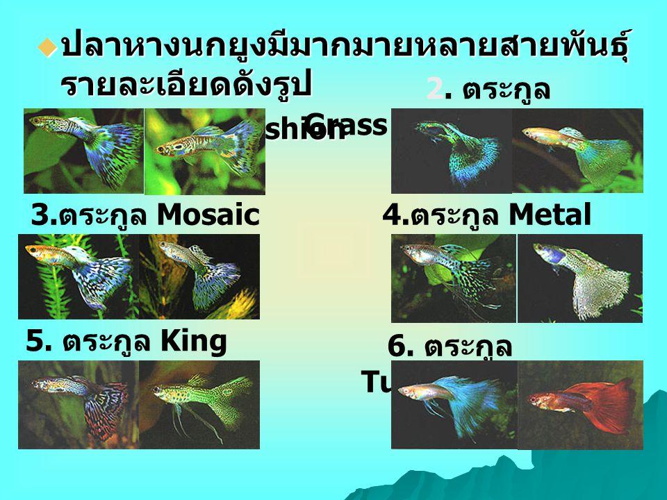  ปลาหางนกยูงมีมากมายหลายสายพันธุ์ รายละเอียดดังรูป 1. ตระกูล Old Fashion 2. ตระกูล Grass 3. ตระกูล Mosaic4. ตระกูล Metal 5. ตระกูล King Cobra 6. ตระก