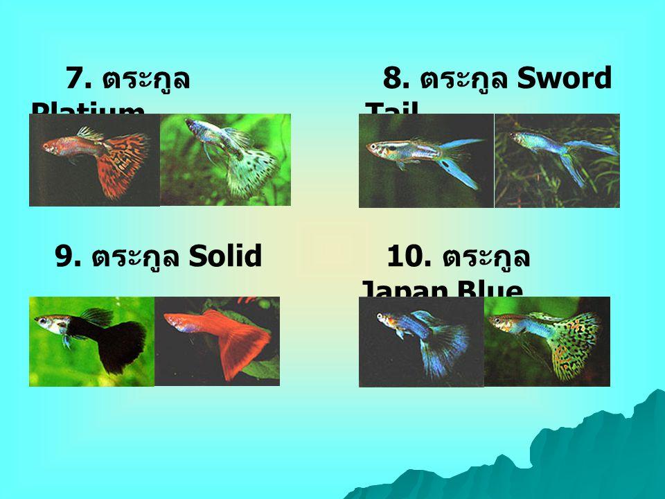 10. ตระกูล Japan Blue 7. ตระกูล Platium 8. ตระกูล Sword Tail 9. ตระกูล Solid