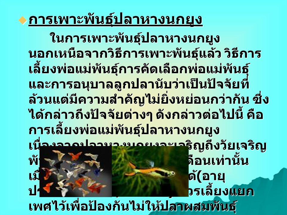  การเพาะพันธุ์ปลาหางนกยูง ในการเพาะพันธุ์ปลาหางนกยูง นอกเหนือจากวิธีการเพาะพันธุ์แล้ว วิธีการ เลี้ยงพ่อแม่พันธุ์การคัดเลือกพ่อแม่พันธุ์ และการอนุบาลล