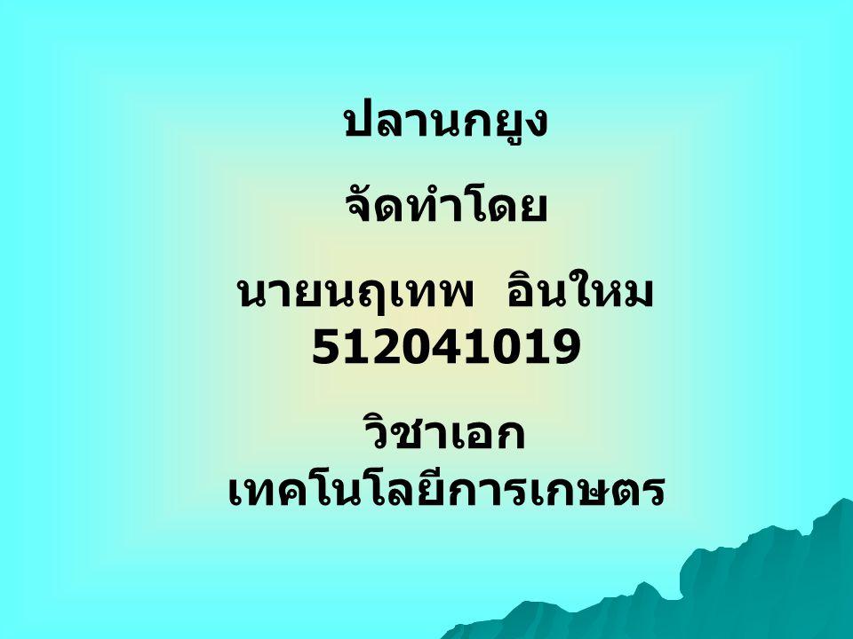 ปลานกยูง จัดทำโดย นายนฤเทพ อินใหม 512041019 วิชาเอก เทคโนโลยีการเกษตร