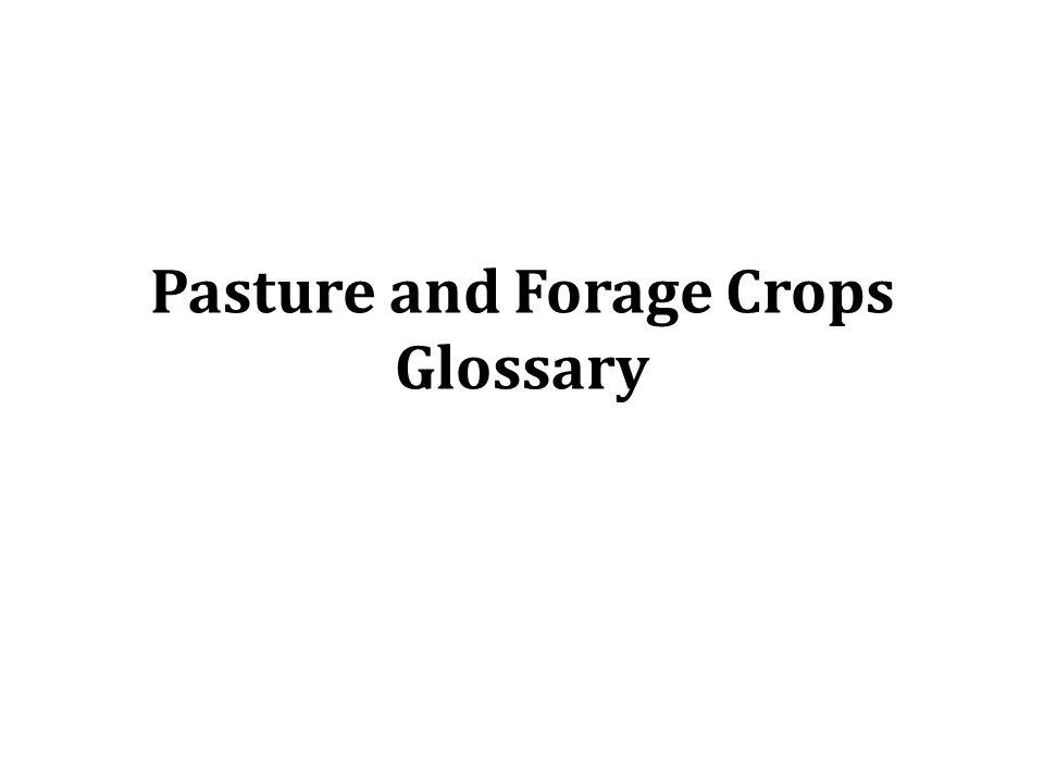 Forage ( พืชอาหารสัตว์ ) หมายถึง พืชใดๆ ที่สัตว์กินเป็น อาหาร