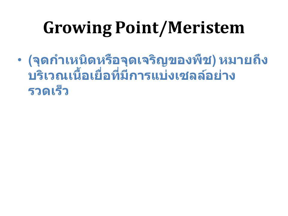 Growing Point/Meristem ( จุดกำเหนิดหรือจุดเจริญของพืช ) หมายถึง บริเวณเนื้อเยื่อที่มีการแบ่งเซลล์อย่าง รวดเร็ว