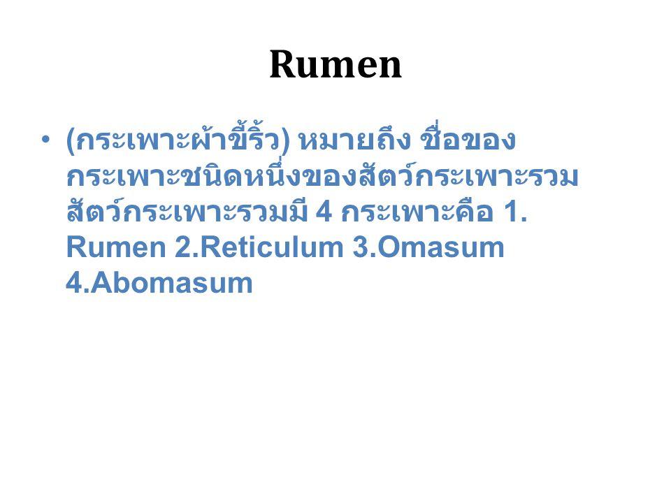 Rumen ( กระเพาะผ้าขี้ริ้ว ) หมายถึง ชื่อของ กระเพาะชนิดหนึ่งของสัตว์กระเพาะรวม สัตว์กระเพาะรวมมี 4 กระเพาะคือ 1. Rumen 2.Reticulum 3.Omasum 4.Abomasum