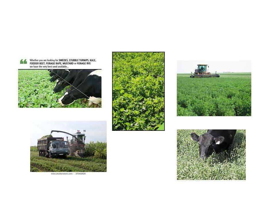 Pasture ( ทุ่งหญ้าเลี้ยวสัตว์ ) หมายถึงพื้นที่ที่มีอาหาร สัตว์ซึ่งส่วนใหญ่มักเป็นหญ้าหรือถั่วอาหารสัตว์