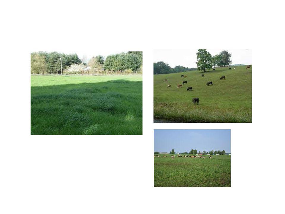 Stolon ( ไหล ) หมายถึง ลำต้นของหญ้าที่เจริญไป ทางด้านข้างขนานไปบนพื้นดิน พร้อมกับราก สามัญ