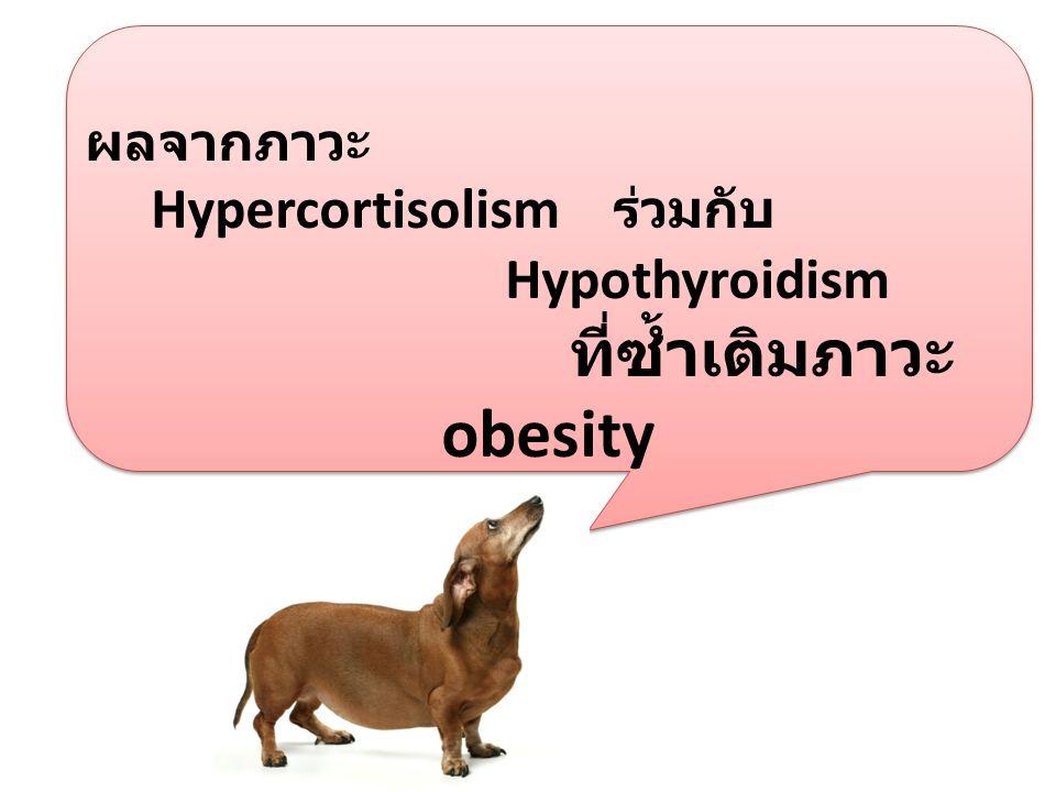 ผลจากภาวะ Hypercortisolism ร่วมกับ Hypothyroidism ที่ซ้ำเติมภาวะ obesity