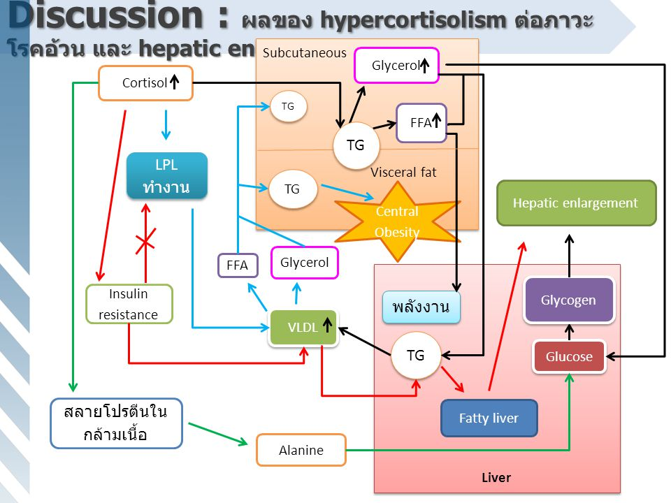Discussion : ผลของ hypercortisolism ต่อภาวะ โรคอ้วน และ hepatic enlargement Liver Subcutaneous Visceral fat Subcutaneous Visceral fat Glycerol FFA Glu