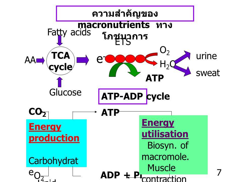 ความสำคัญของ macronutrients ทาง โภชนาการ Fatty acids AA TCA cycle Glucose e - ETS ATP O2O2 H2OH2O urine sweat CO 2 Energy production Carbohydrat e Lipid Protein O 2 ATP-ADP cycle ADP + Pi ATP Energy utilisation Biosyn.
